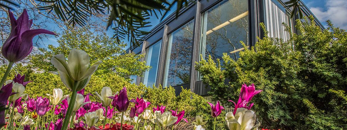 Front of SSA building with tulips