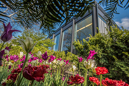 Edith Abbott Hall in the springtime with tulips in front of the building